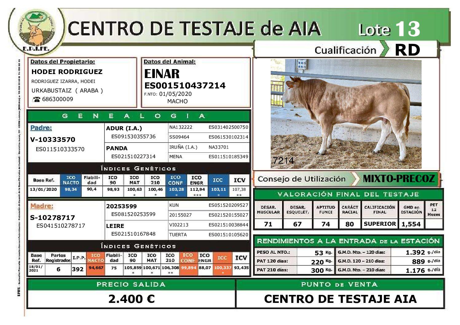 EINAR (Pirenaica Reproductor Cárnico). Criador: Hodei Rodriguez